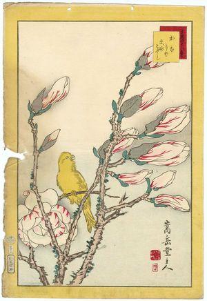 Nakayama Sûgakudô: No. 8 from the series Forty-eight Hawks Drawn from Life (Shô utsushi yonjû-hachi taka) - ボストン美術館