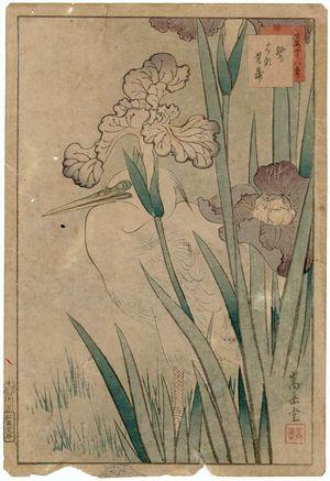 Nakayama Sûgakudô: No. 17, Heron and Iris (Sagi hanashôbu), from the series Forty-eight Hawks Drawn from Life (Shô utsushi yonjû-hachi taka) - Museum of Fine Arts