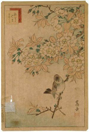 Nakayama Sûgakudô: No. 12 from the series Forty-eight Hawks Drawn from Life (Shô utsushi yonjû-hachi taka) - ボストン美術館