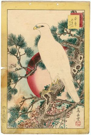 Nakayama Sûgakudô: No. 1, White Falcon and Five-needled Pine (Shirotaka, goyô no matsu), from the series Forty-eight Hawks Drawn from Life (Shô utsushi yonjû-hachi taka) - ボストン美術館