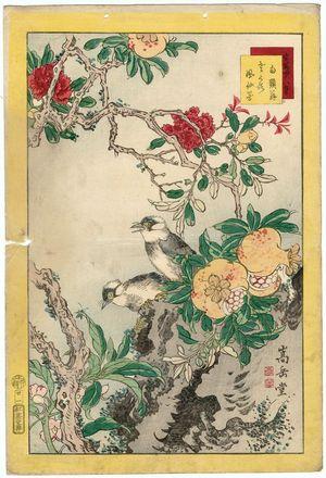 Nakayama Sûgakudô: No. 21 from the series Forty-eight Hawks Drawn from Life (Shô utsushi yonjû-hachi taka) - ボストン美術館
