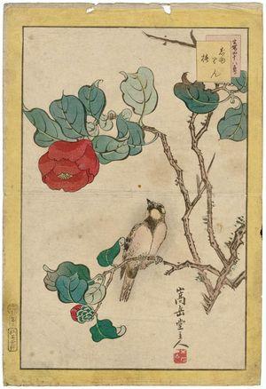 Nakayama Sûgakudô: No. 3 from the series Forty-eight Hawks Drawn from Life (Shô utsushi yonjû-hachi taka) - ボストン美術館