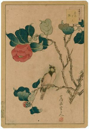 Nakayama Sûgakudô: No. 3 from the series Forty-eight Hawks Drawn from Life (Shô utsushi yonjû-hachi taka) - ボストン美術館