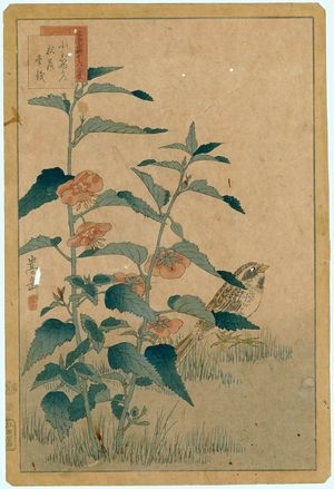 Nakayama Sûgakudô: No. 32 from the series Forty-eight Hawks Drawn from Life (Shô utsushi yonjû-hachi taka) - ボストン美術館