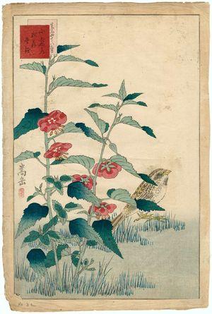 Nakayama Sûgakudô: No. 32 from the series Forty-eight Hawks Drawn from Life (Shô utsushi yonjû-hachi taka) - ボストン美術館