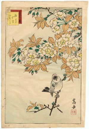 Nakayama Sûgakudô: No. 12 from the series Forty-eight Hawks Drawn from Life (Shô utsushi yonjû-hachi taka) - Museum of Fine Arts