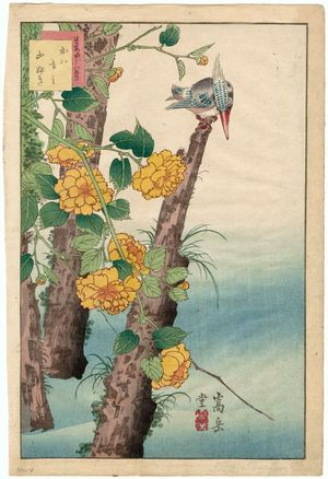 Nakayama Sûgakudô: No. 4, Kingfisher and Kerria Roses (Kawasemi yamabuki), from the series Forty-eight Hawks Drawn from Life (Shô utsushi yonjû-hachi taka) - Museum of Fine Arts