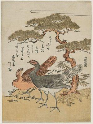磯田湖龍齋: Two Ptarmigans under a Pine Tree - ボストン美術館