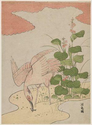 磯田湖龍齋: Egret and Mizu-aoi - ボストン美術館