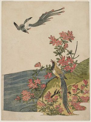 Isoda Koryusai: Magpies and Azaleas - Museum of Fine Arts
