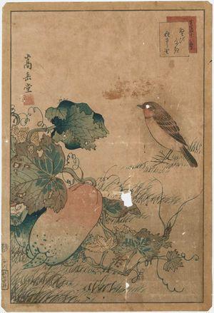 Nakayama Sûgakudô: No. 26 from the series Forty-eight Hawks Drawn from Life (Shô utsushi yonjû-hachi taka) - Museum of Fine Arts