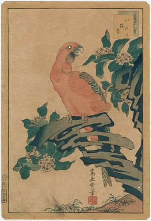 Nakayama Sûgakudô: No. 10 from the series Forty-eight Hawks Drawn from Life (Shô utsushi yonjû-hachi taka) - ボストン美術館