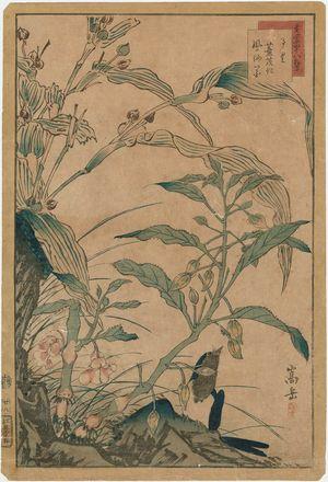 Nakayama Sûgakudô: No. 28 from the series Forty-eight Hawks Drawn from Life (Shô utsushi yonjû-hachi taka) - ボストン美術館