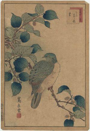 Nakayama Sûgakudô: No. 22 from the series Forty-eight Hawks Drawn from Life (Shô utsushi yonjû-hachi taka) - ボストン美術館