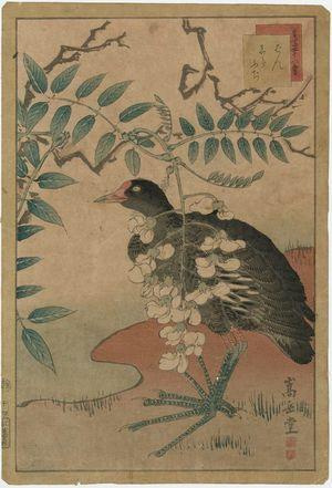 Nakayama Sûgakudô: No. 14 from the series Forty-eight Hawks Drawn from Life (Shô utsushi yonjû-hachi taka) - Museum of Fine Arts