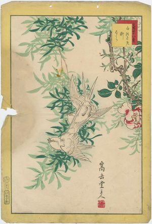 Nakayama Sûgakudô: No. 18 from the series Forty-eight Hawks Drawn from Life (Shô utsushi yonjû-hachi taka) - ボストン美術館