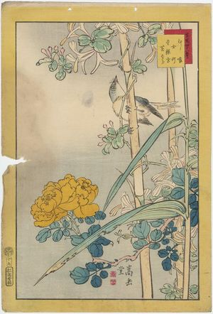 Nakayama Sûgakudô: No. 19 from the series Forty-eight Hawks Drawn from Life (Shô utsushi yonjû-hachi taka) - ボストン美術館