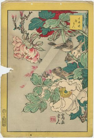 Nakayama Sûgakudô: No. 15 from the series Forty-eight Hawks Drawn from Life (Shô utsushi yonjû-hachi taka) - ボストン美術館