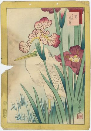 Nakayama Sûgakudô: No. 17, Heron and Iris (Sagi hanashôbu), from the series Forty-eight Hawks Drawn from Life (Shô utsushi yonjû-hachi taka) - Museum of Fine Arts