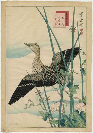 Nakayama Sûgakudô: No. 23 from the series Forty-eight Hawks Drawn from Life (Shô utsushi yonjû-hachi taka) - ボストン美術館