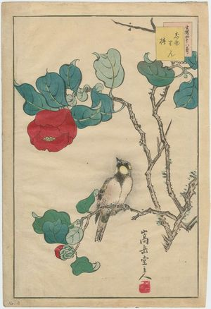 Nakayama Sûgakudô: No. 3 from the series Forty-eight Hawks Drawn from Life (Shô utsushi yonjû-hachi taka) - Museum of Fine Arts