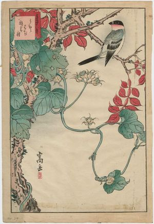 Nakayama Sûgakudô: No. 29 from the series Forty-eight Hawks Drawn from Life (Shô utsushi yonjû-hachi taka) - ボストン美術館