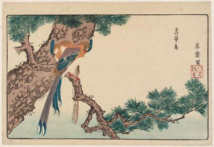 北尾政美: Magpies (Jutaichô) in Pine Tree, reprinted from the album Kaihaku raikin zui (A Compendium of Pictures of Birds Imported from Overseas) - ボストン美術館