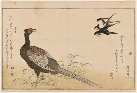 Kitagawa Utamaro: Swallows (Tsubame) and Green Pheasant (Kiji), from the album Momo chidori kyôka awase (Myriad Birds: A Kyôka Competition) - Museum of Fine Arts