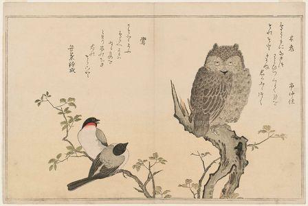 Kitagawa Utamaro: Scops Owl (Mimizuku) and Bullfinches (Uso), from the album Momo chidori kyôka awase (Myriad Birds: A Kyôka Competition) - Museum of Fine Arts