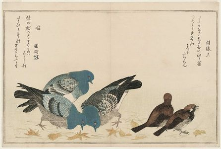 Kitagawa Utamaro: Sparrows (Murasuzume) and Pigeons (Hato), from the album Momo chidori kyôka awase (Myriad Birds: A Kyôka Competition) - Museum of Fine Arts