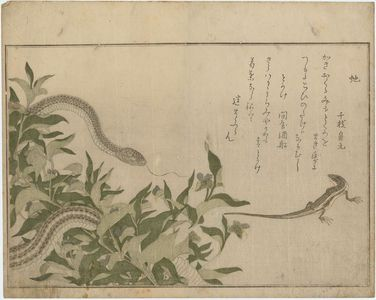 Kitagawa Utamaro: Skink (Tokage) and Rat Snake (Hebi), from the album Ehon mushi erami (Picture Book: Selected Insects) - Museum of Fine Arts