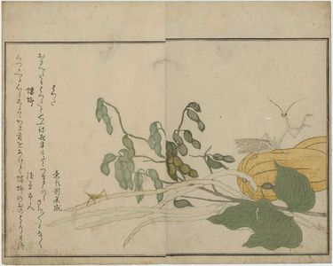 喜多川歌麿: Praying Mantis (Tôrô/kamakiri) and Cone-headed Grasshopper (Batta), from the album Ehon mushi erami (Picture Book: Selected Insects) - ボストン美術館