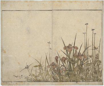 Kitao Shigemasa: Iris and Mizu-aoi, floral endpaper from the book Mirror of Beautiful Women of the Green Houses (Seirô bijin awase sugata kagami) - Museum of Fine Arts