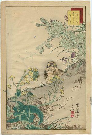 Nakayama Sûgakudô: No. 7 from the series Forty-eight Hawks Drawn from Life (Shô utsushi yonjû-hachi taka) - Museum of Fine Arts