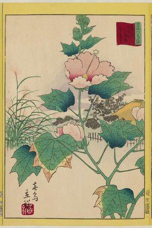 Utagawa Hiroshige II: Hibiscus in the Flower Garden [at Mukôjima] on the Sumida River in the Eastern Capital (Tôto Sumidagawa hana yashiki fuyô-bana), from the series Thirty-six Selected Flowers (Sanjûrokkasen) - Museum of Fine Arts