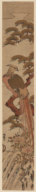 磯田湖龍齋: Golden Pheasant on Pine Tree beside Waterfall - ボストン美術館
