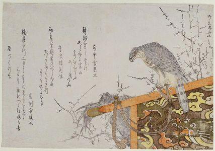 Ryuryukyo Shinsai: Hawk on a Perch - Museum of Fine Arts