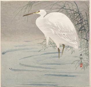 Ohara Koson: Snowy heron standing beside reeds in water - Museum of Fine Arts