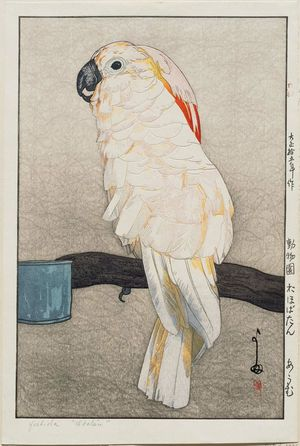 吉田博: Ôbatan Parrot (Ôbatan ômu), from the series Zoo (Dôbutsuen) - ボストン美術館