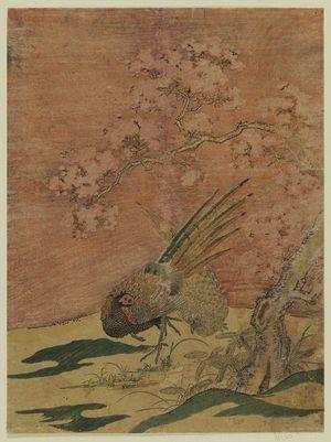 磯田湖龍齋: Pheasants under Cherry Blossoms - ボストン美術館