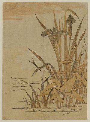 磯田湖龍齋: White Heron and Iris - ボストン美術館