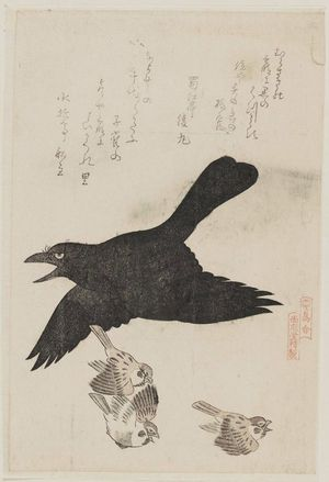Kubo Shunman: Raven and Sparrows, from the series Tori awase - Museum of Fine Arts