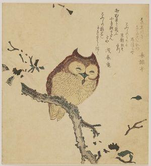 窪俊満: Horned Owl on Flowering Branch - ボストン美術館