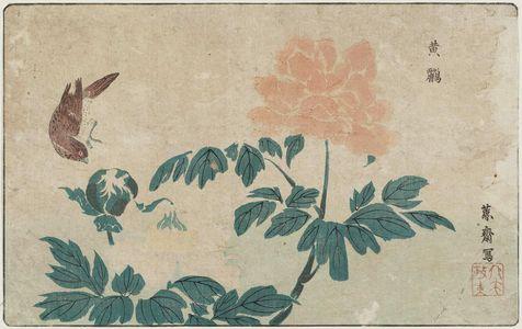 北尾政美: Bird and Peonies - ボストン美術館