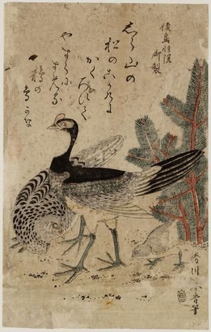 Katsukawa Shunsei: Cock, hen, and chick - ボストン美術館