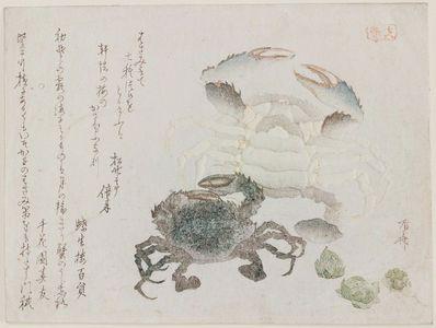 柳々居辰斎: Two Crabs - ボストン美術館