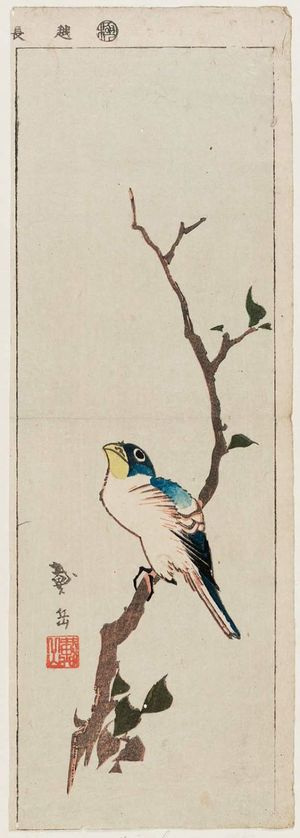 Taigaku: Bird on Branch - Museum of Fine Arts