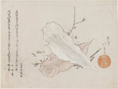 Teisai Hokuba: Dried Fish - Museum of Fine Arts