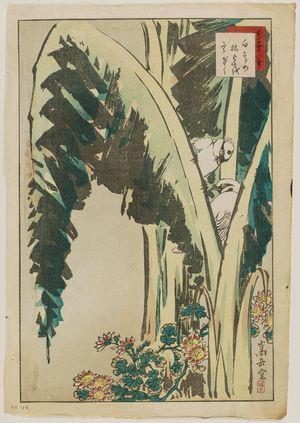 Nakayama Sûgakudô: No. 44 from the series Forty-eight Hawks Drawn from Life (Shô utsushi yonjû-hachi taka) - ボストン美術館