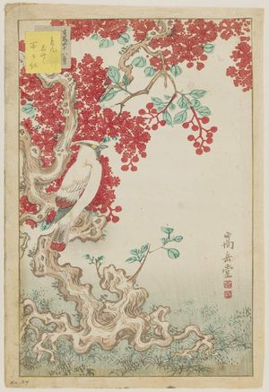 Nakayama Sûgakudô: No. 24 from the series Forty-eight Hawks Drawn from Life (Shô utsushi yonjû-hachi taka) - Museum of Fine Arts